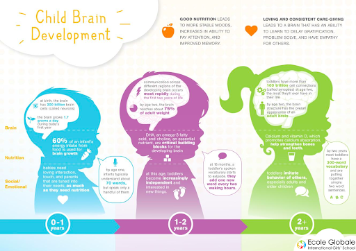 HOW A CHILD'S BRAIN DEVELOPS OVER THE YEARS